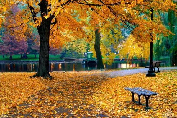 Золотая осень стих