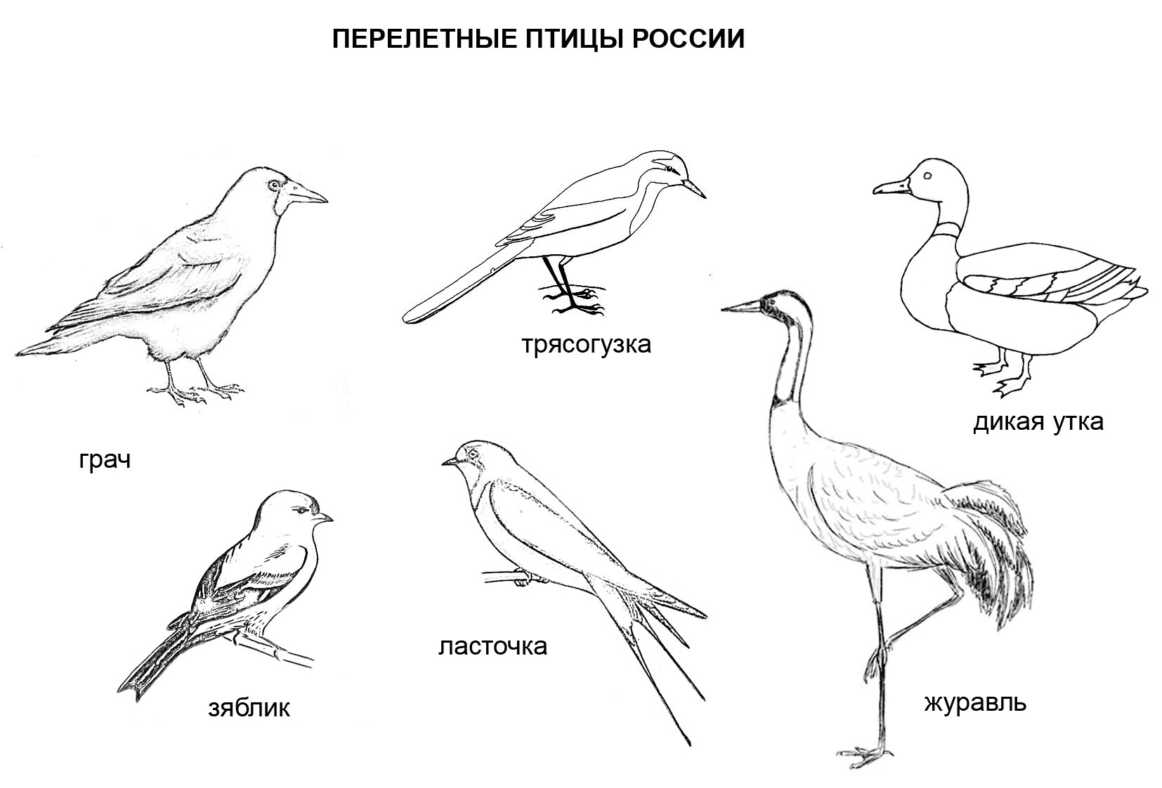 Птицы и животные раскраски детские: Раскраски: перелетные птицы для детей