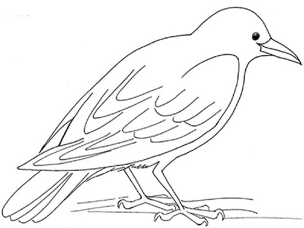 попробуйте распечатать раскраски зимующие птицы если